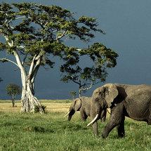 Elephants and stormy sky