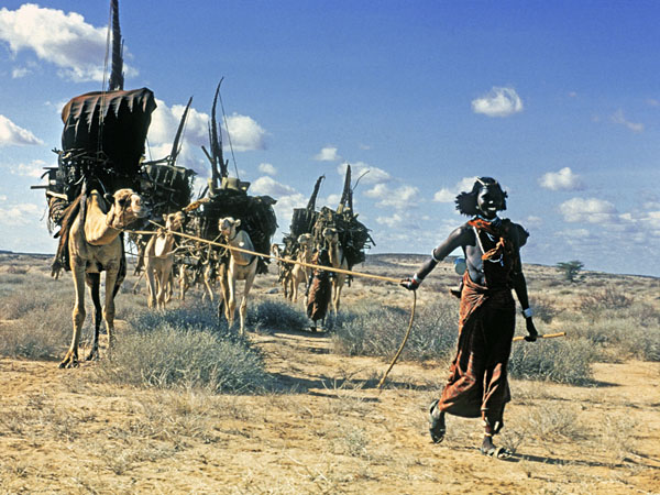 Gabbra woman with camels