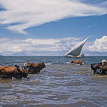 Lake Victoria, Kenya