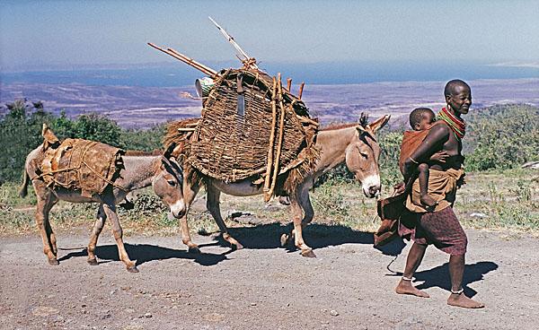 Samburu woman migrating