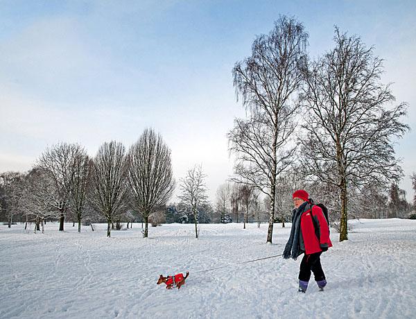 Winter walk with dog