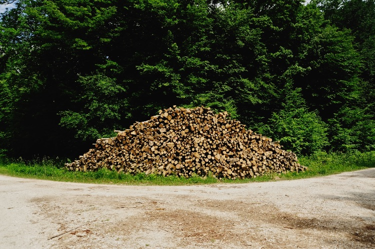Cut Trees Orient France