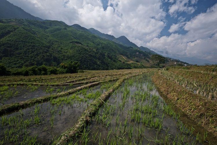 SESAP 026 Rce growing terraces, northern mountains, Vietnam