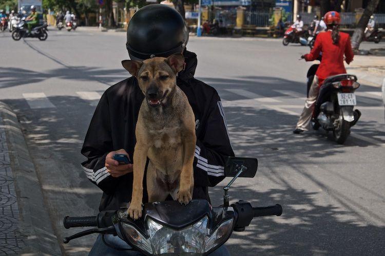 SESTREET 062 Motorcyclist Hoi An