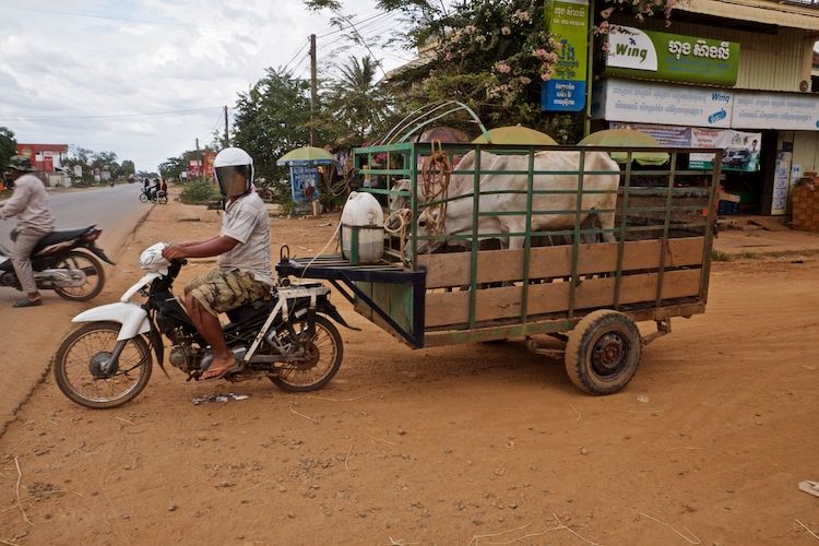 SESTREET 078 Cattle Wagon nr Krasang on route to Siem Reap, Cambodia