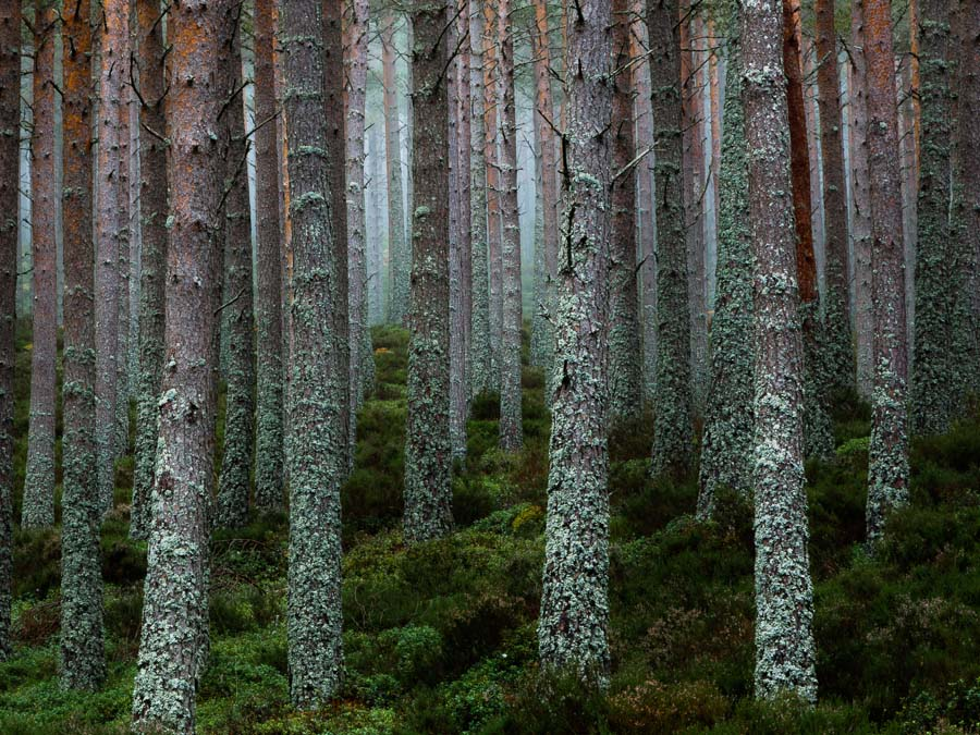 'United they Stand'. Highly Commended, Landscape Photographer of the Year 2015