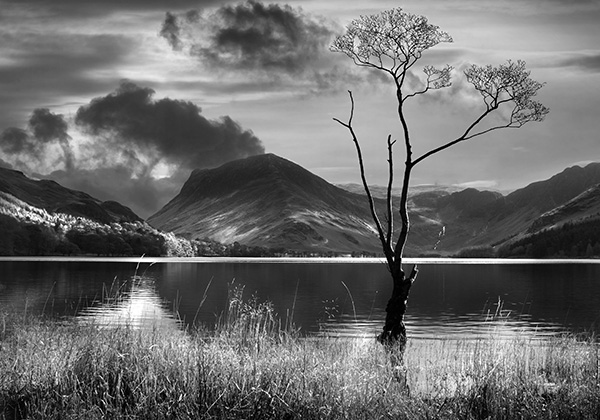 Tree on Buttermere
