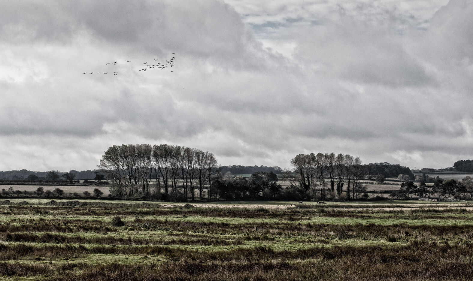 Burnham Overy Marsh, Norfolk