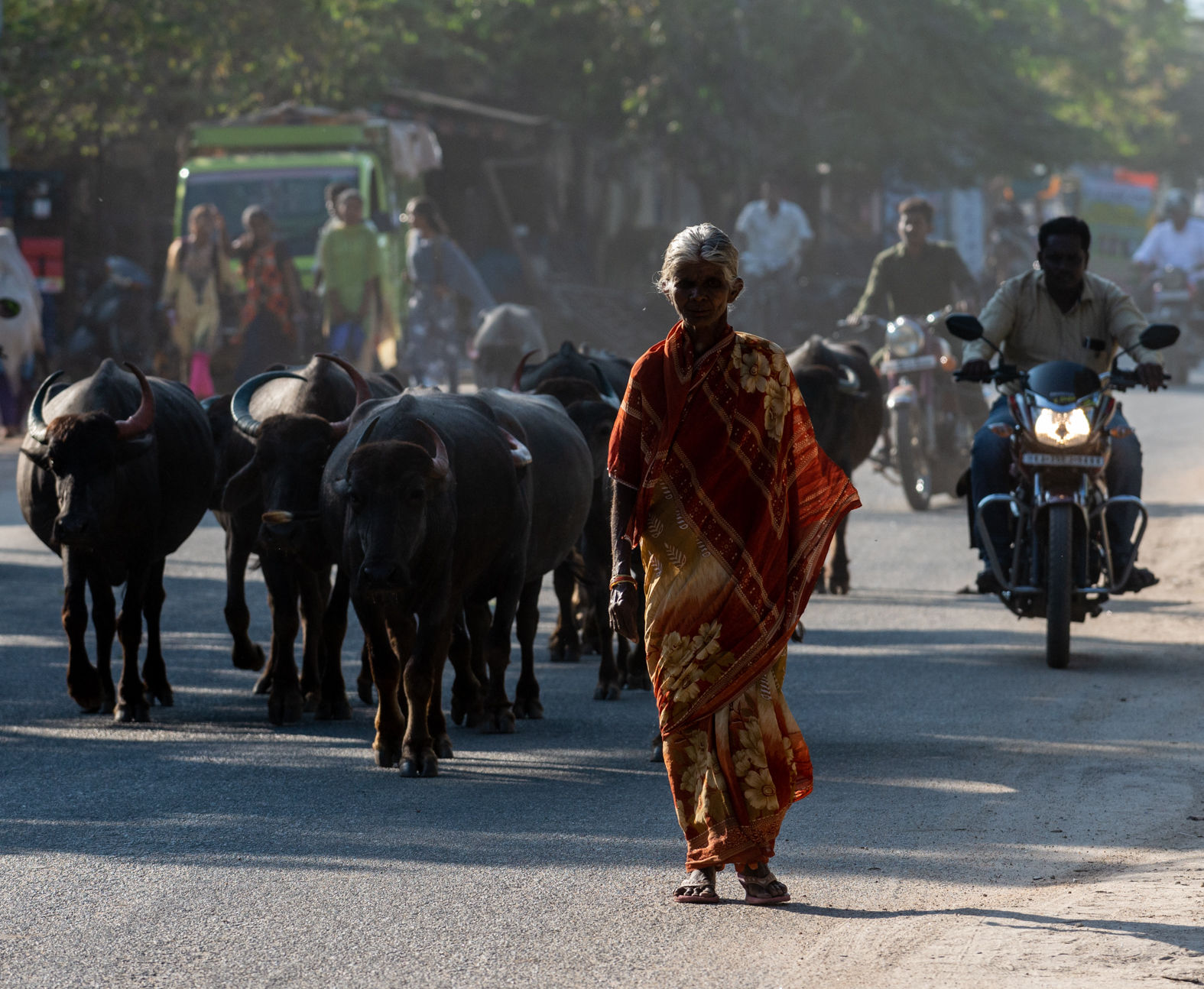 Lady with her herd of buffalo, Hampi