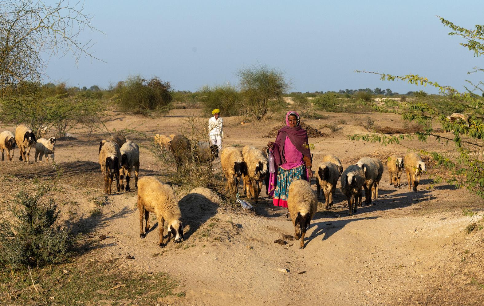 Dhikola village, Shapura, Rajasthan