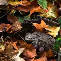 Autumn Forest - Acorns