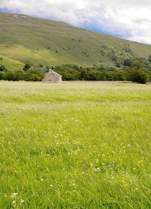 Upper Wharfedale Meadow.