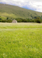 Upper Wharfedale Meadow.