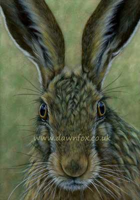 Head of Hare