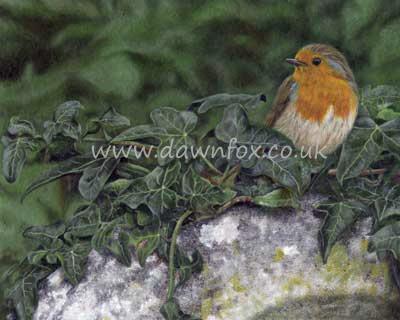 Churchyard Robin