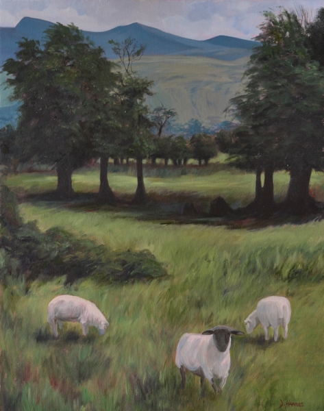 Brecon Sheep
