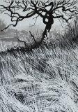 Ink Tree I