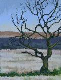 Tree - Llantwit Fardre