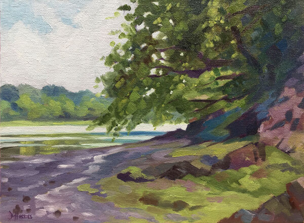 Tree over Cleddau River