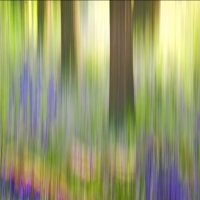 BLUEBELL WOOD ABSTRACTION by Ashley Franklin