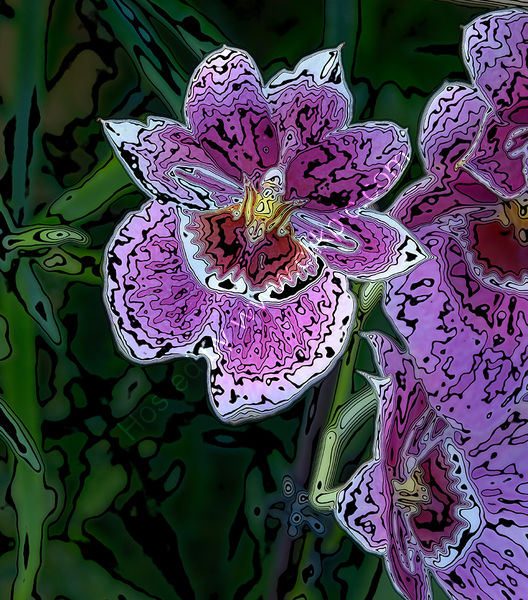 CONTOURED ORCHIDS by Peter Dishart
