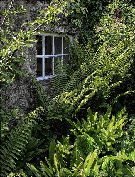 COTTAGE WINDOW by Sue Swain