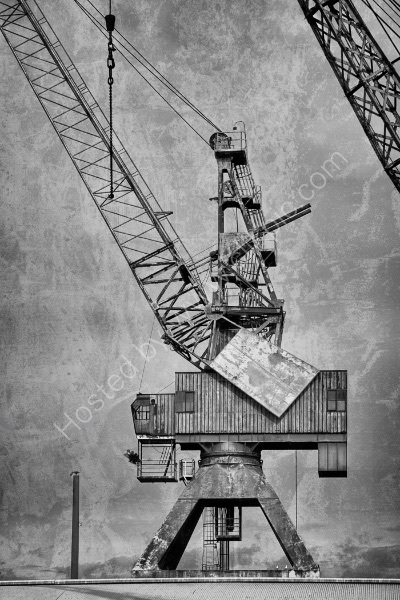 CRANES AND GULLS by Nigel Seale