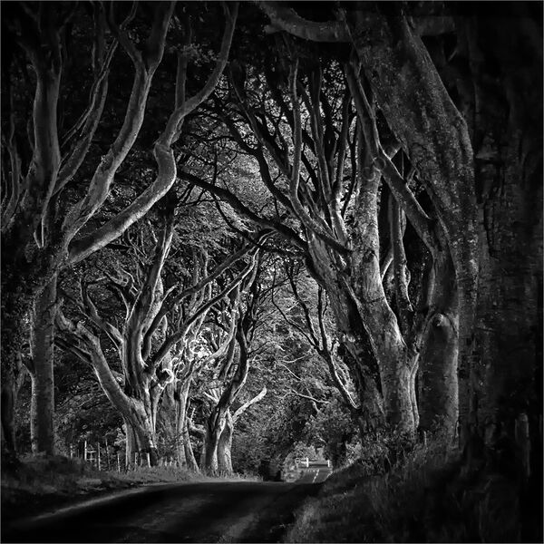DARK HEDGES by Roger Fountain