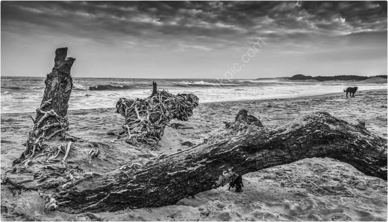 DOG ON STORMY BEACH by Tony Barker