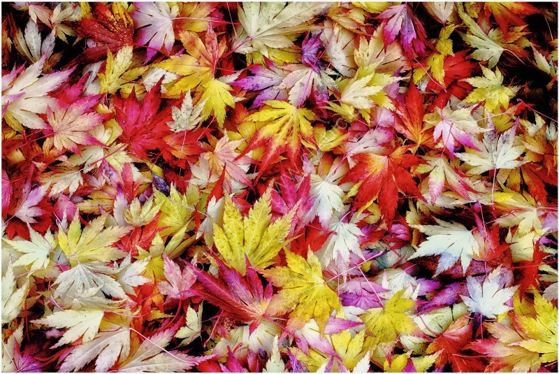 FALLEN LEAVES by Jim Connolly