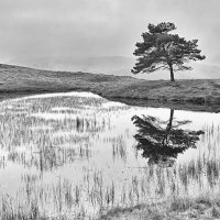 KELLY HALL TARN by Malcolm Sargent