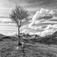LONE TREE & THE CUILLINS by Mike Arblaster