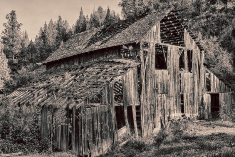 OLD BARN IN WOODS by Tony Barker