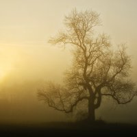 OUT OF A MISTY MORN By Wayne Churchill