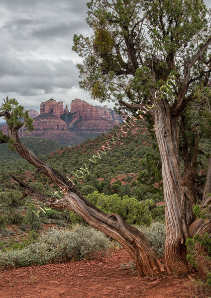 RED ROCK COUNTRY by Christine Maughan
