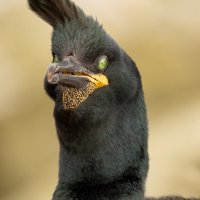 SHAG by Nigel Seale