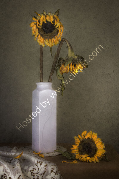 SPENT SUNFLOWERS by Christine Maughan