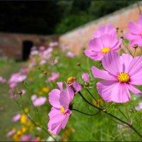 SUMMER FLOWER BORDER by Alan Locke