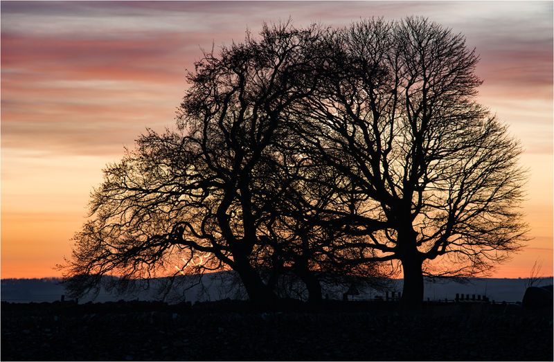 SUNSET SILHOUETTE by Mark Constable