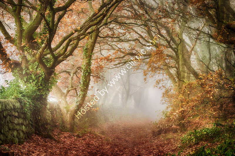 THE MISTY GLADE, CHEVIN WOOD by Ashley Franklin