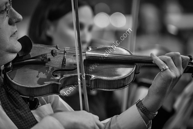 THE VIOLINIST by Ashley Franklin