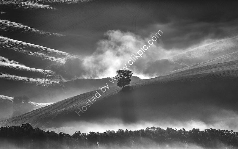 TREE IN THE MIST by ASHLEY FRANKLIN