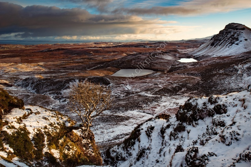 TREE WITH A VIEW by Mark Constable