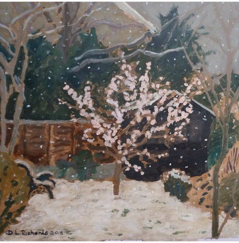 Apricot Blossom In Snow