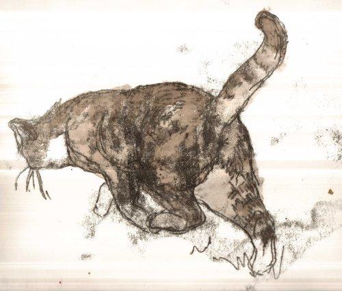 Cross Tabby Cat