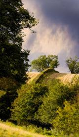 Hedgerows neat Hartswell Farm