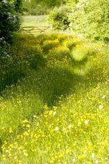 Meadow Machins Farm Halam