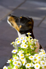 Monty the Dog