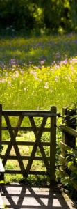 Meadow at Potwell Dyke