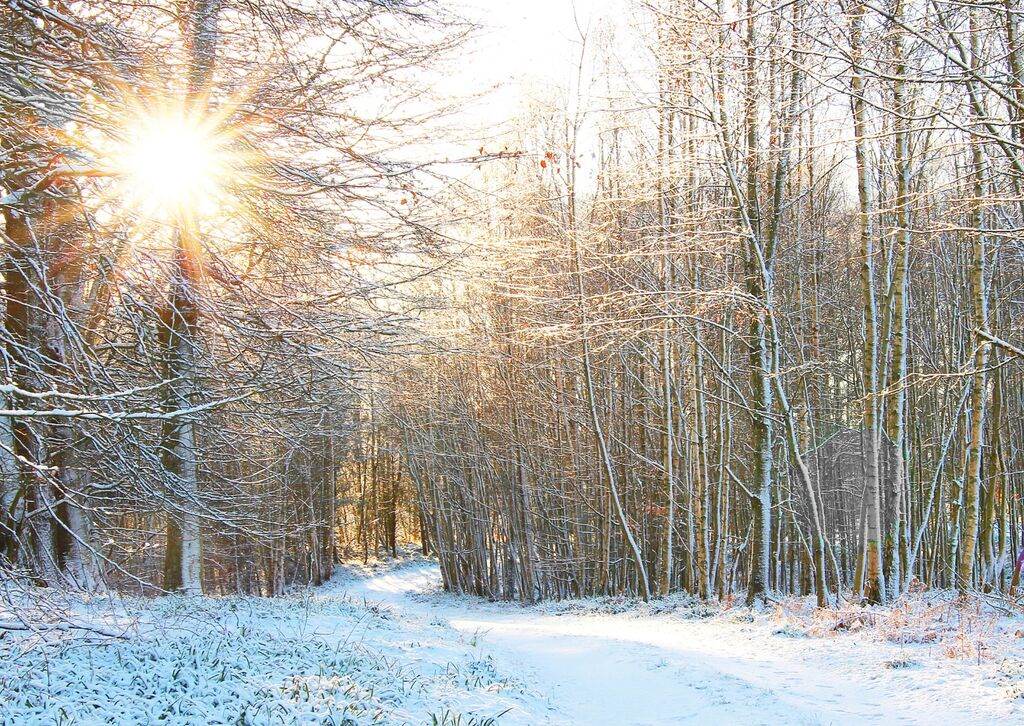 Winter Sun in Woodland